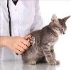Ветеринарные клиники в Туже